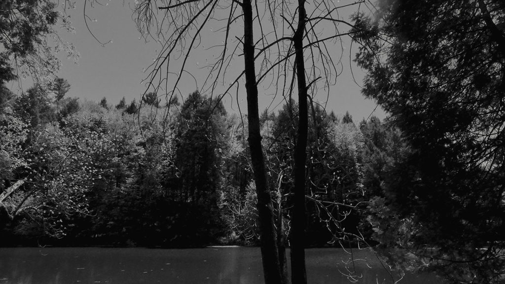 Black and white image of a tree with water behind it and more vegitation in the background
