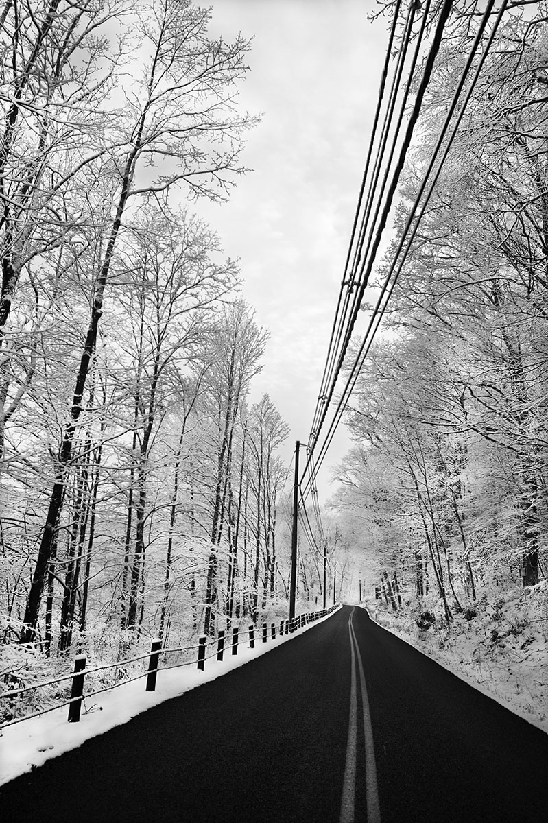 Black and white image of black road flanked by spindly trees with snow
